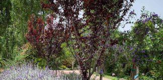 zelios-botanical-gardens-nafpaktos-messolonghi-fiori-gh