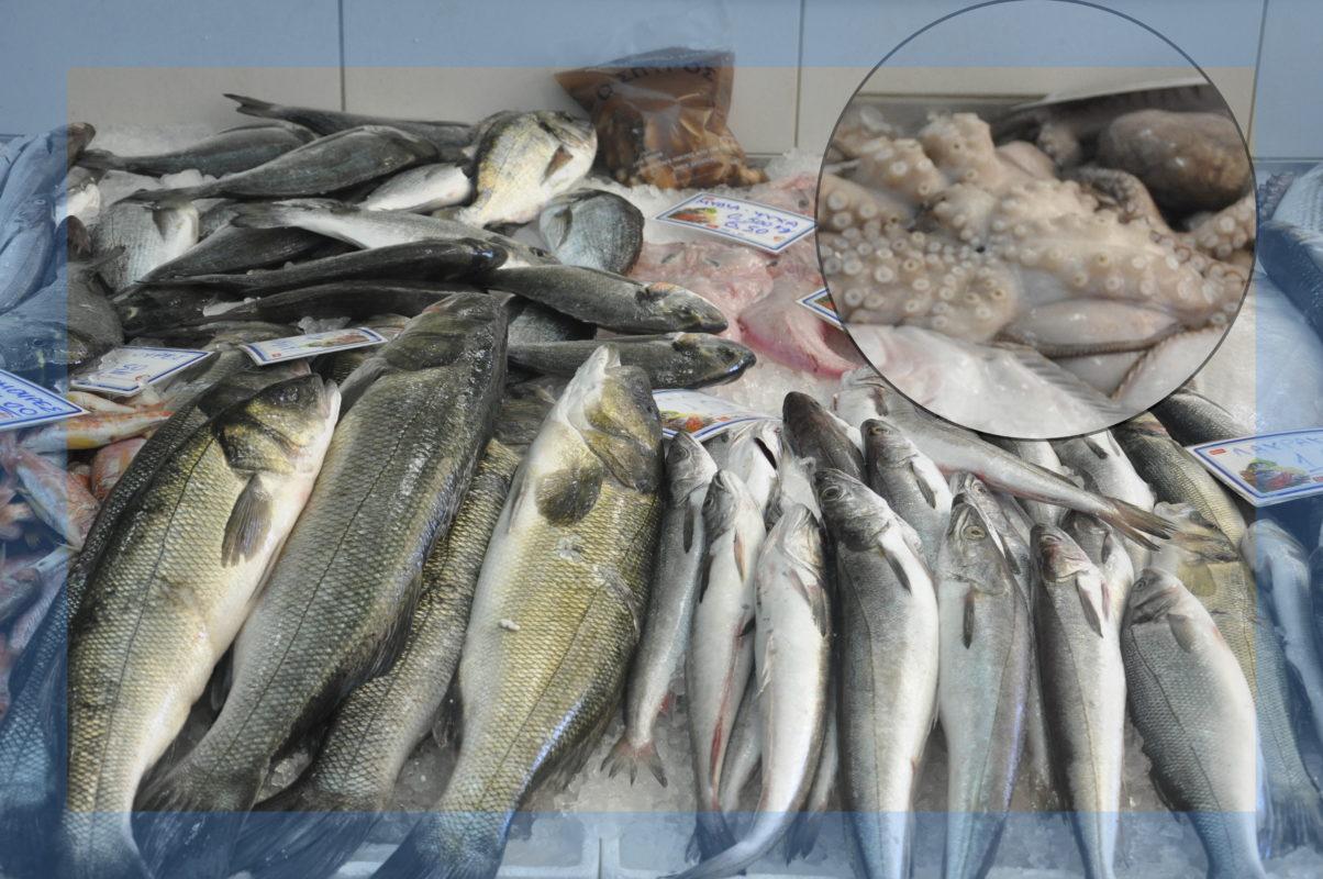 gripos-fish-octapus